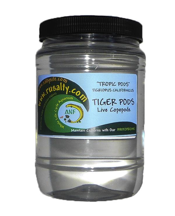 tigger-pods-for-sale-live-copepods-fish-food-tiger-pods-mandarin-fish-food-seahorse.jpg